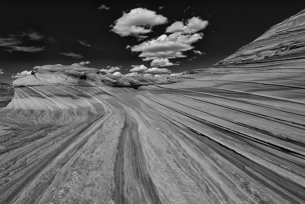 The Second Wave, Justin Hofman, Arizona