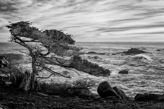 Buy this Point Lobos print