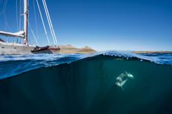 Dolphin and sail boat Justin Hofman