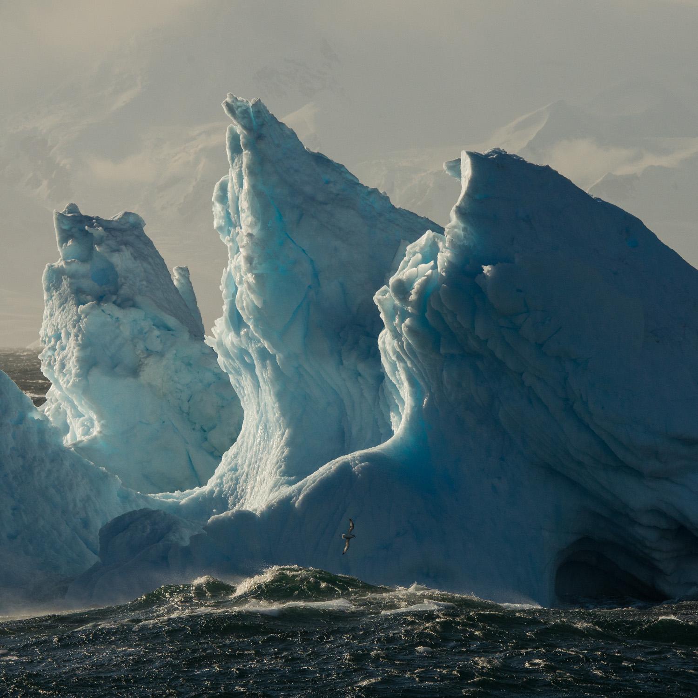 Hofman_antarctica03.jpg