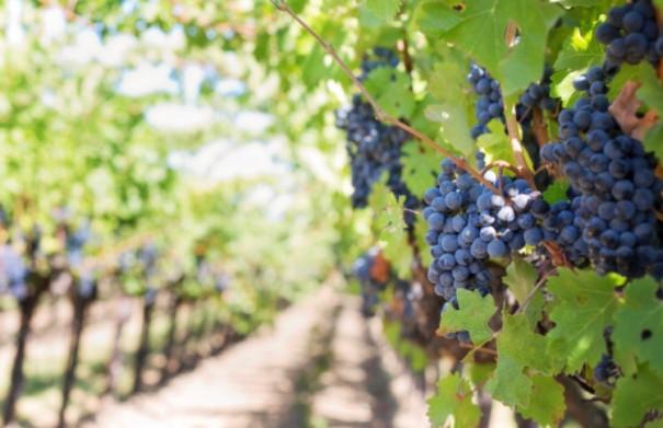 The Vineyard and the Cornerstone Judgement