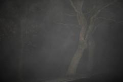 Foggy Christmas in Glasgow - IMG_5408.JP