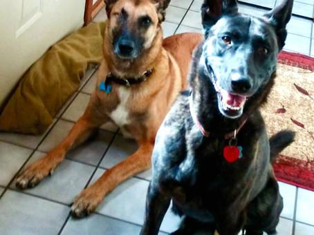 DogGone 2020: A Retrospective by Argo & Lucca