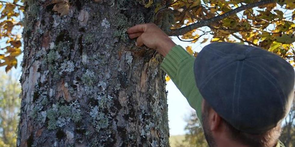 Découverte du monde mystérieux des lichens