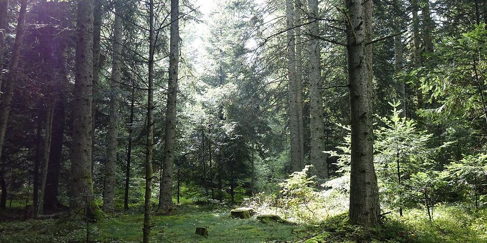 A la découverte des champignons comestibles et autres avec dégustations dans les bois autour de Saint-Bonnet le Château