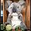 Thumbnail: Grey Koala