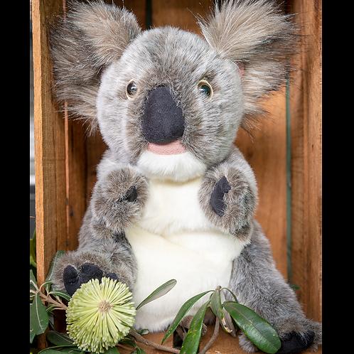 Grey Koala