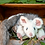 Thumbnail: Greater Glider