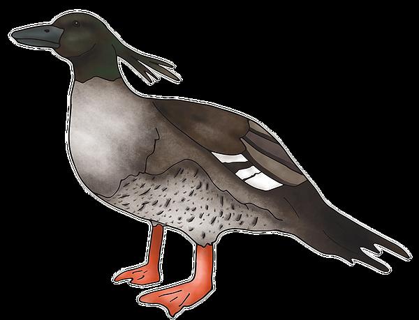 Brazilian-Duck.png