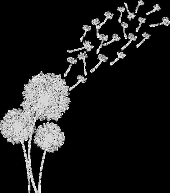 Fleurs de Pissenlit au vent