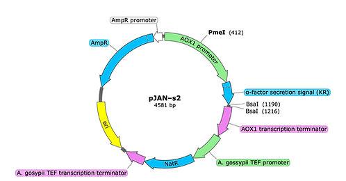 pJAN-s2