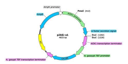 pJAG-s1 (precut)