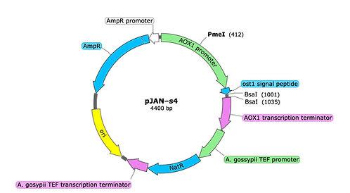 pJAN-s4 (precut)