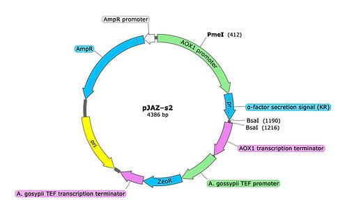 pJAZ-s2 (precut)