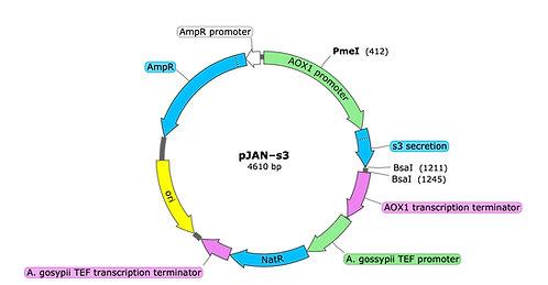 pJAN-s3 (precut)