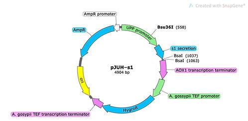 pJUH-s1 (precut)