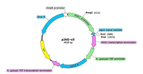 pJAG-s5 (precut)
