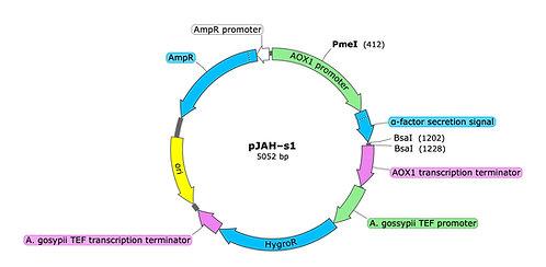 pJAH-s1 (precut)