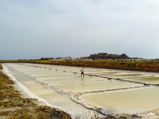 the salt farms.jpg