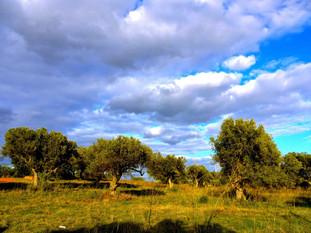 Trees On The Land.jpg