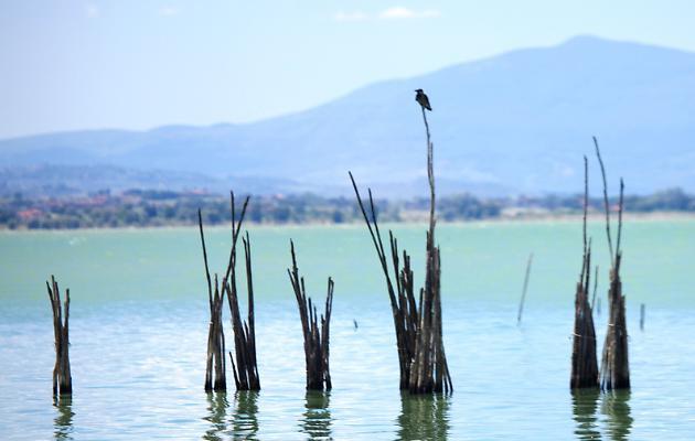 Cultura dell'acqua:l'Italia continua ad essere in ritardo. Un commento di Francesco Lettera