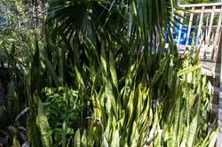 Island Resort, Abacos Bahamas