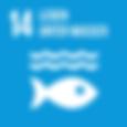 14 Leben unter Wasser.png