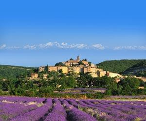 A Letter for Peace from Provence