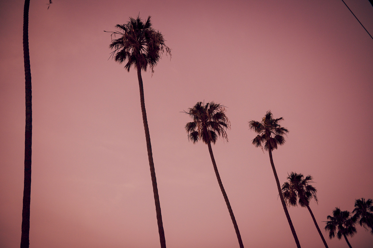 Palms_1500px.jpg
