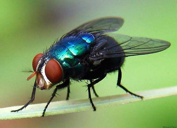 mosca 3.jpg
