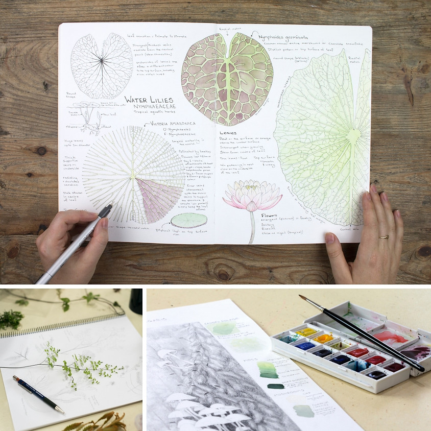 Nature Journaling with Meredith Woolnough