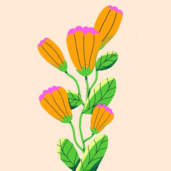 fleurs_2021.jpg