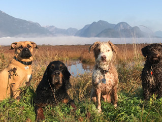 Five Reasons Why Obedience Training Is Good for You and Your Dog!