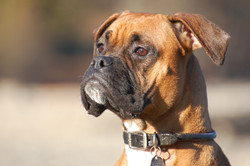 Dog Walker Maple Ridge
