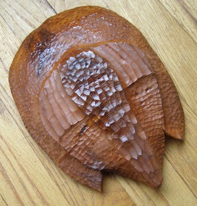 Trilobite Carving in Pacific Yew