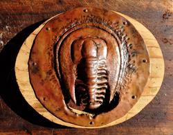 copper trilobite vent fan cover...