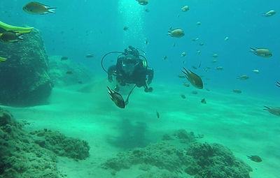 SSAC Diver (Elaine)