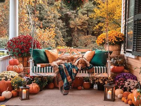 L'automne et ses fleurs