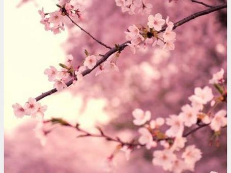 Quelle influence le printemps a dans ma vie ?