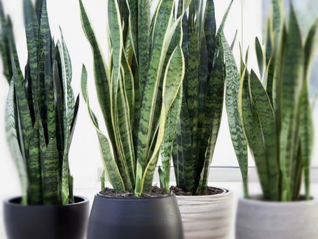 Top 6 des plantes d'intérieur
