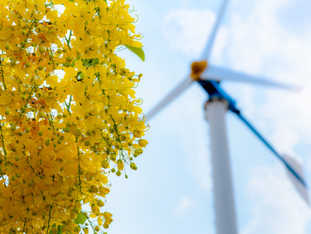 Electerro's clean-energy legacy is laid out in magnolia leaves