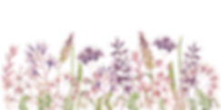 Wild flowers_border.png