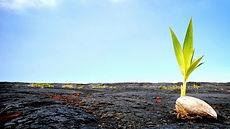 1 coconut in Lava.jpg