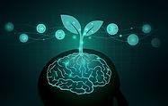 1 Brain seed.jpg
