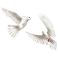 —Pngtree—two_white_world_peace_doves