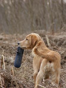 Hund (2).jpg