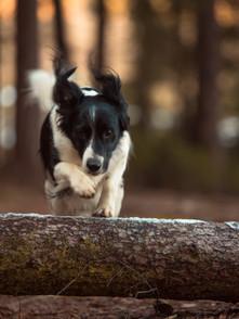 Hund (1).jpg