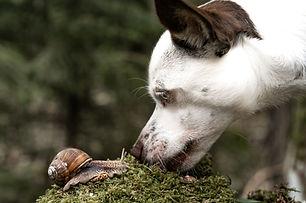 Hund (3).jpg