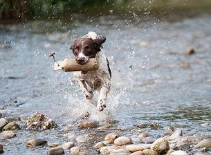 Hund (4).jpg
