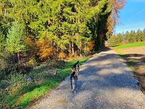 Hundespaziergang.jpg